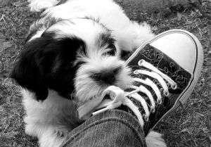 Puppy Socialiser