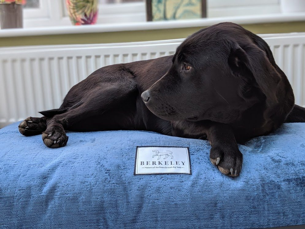 What Are the Best Dog Beds You Can Buy This Year?