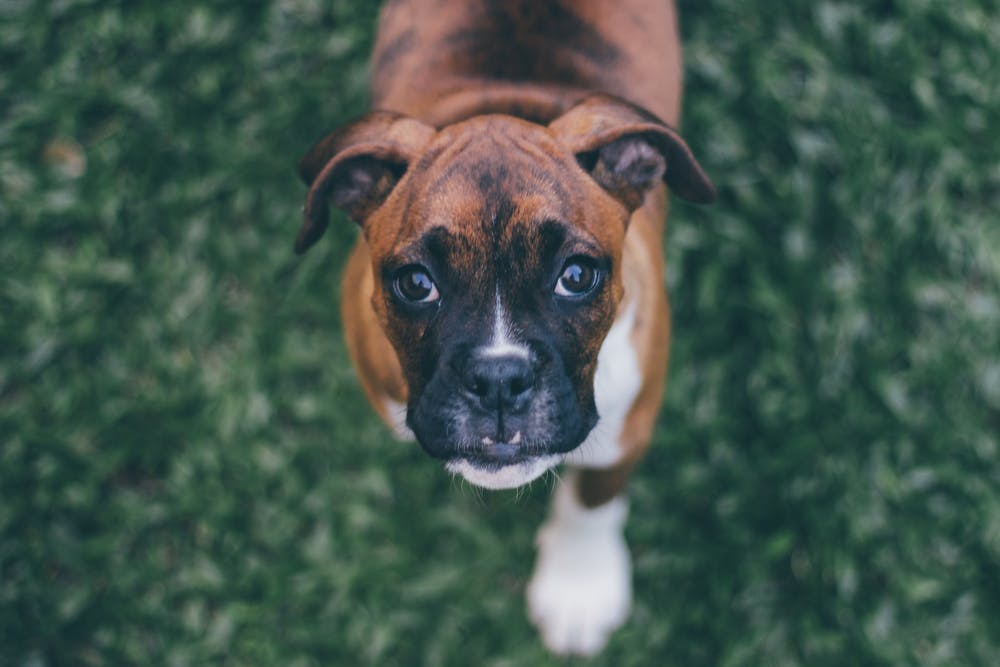 The 100 Greatest Dog Training Tips of All Time!