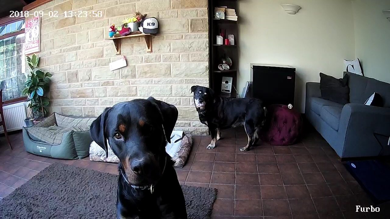 5 Times the Furbo Dog Camera Has Been a Game Changer