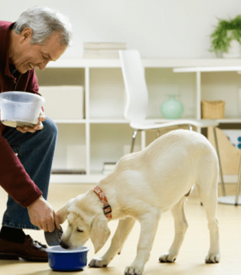 Top Most Important Puppy Training Tips