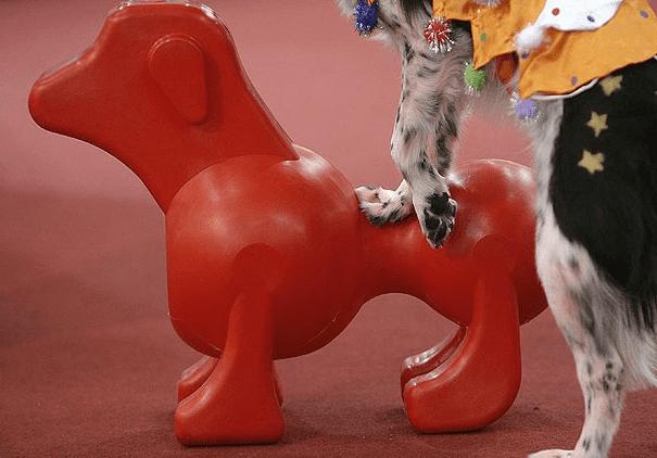 Dog Sex Doll Goes on Sale