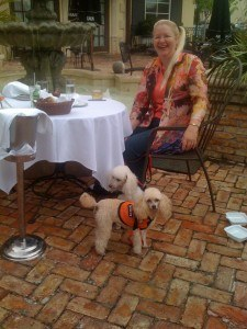 How Diabetic Alert Dogs Are Trained