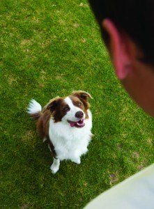 Canine Learning Theory Part III