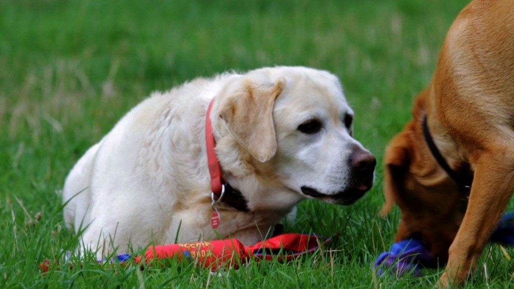 Arthritis in Dogs - What You Need to Know