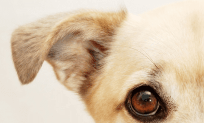 How to Have a Dog Proof Home