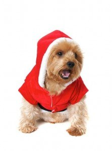 Countdown To Christmas: Christmas Gifts for Dogs & Dog Lovers