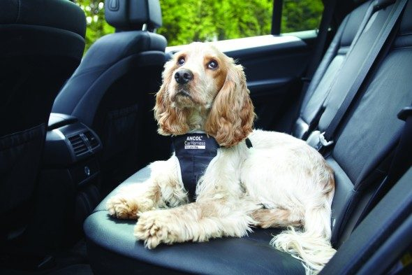 Pet Friendly Britain: Planning A Pet Friendly Holiday