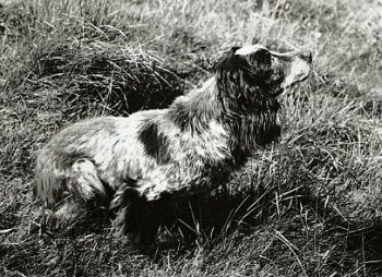 The Seven Most Influential Dogs Of All Time