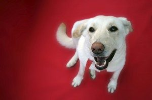 Hip Dysplasia in Dogs: Signs, Symptoms & Treatment