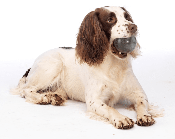 Canine Osteoarthritis: Managing The Disease