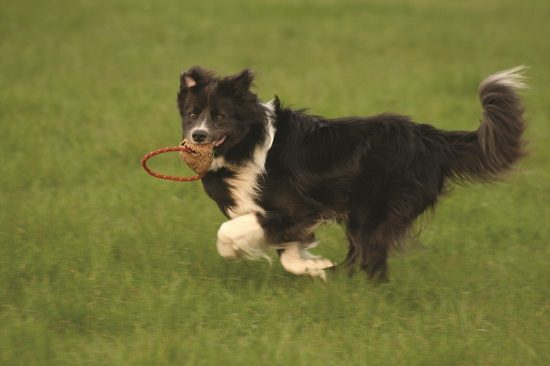 6 Inventions That Changed the World For Dogs