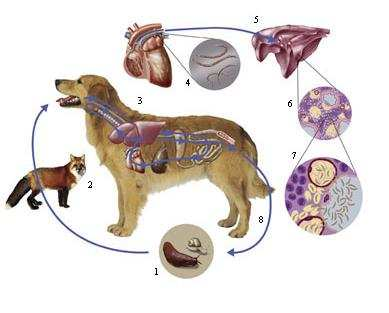how to spot the symptoms of lungworm in dogs