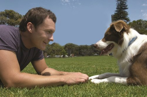 Top 10 Breeds For Active Dog Owners