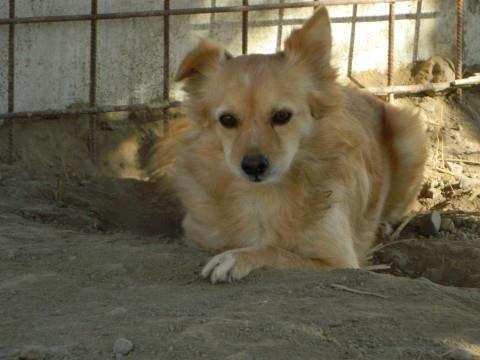 Adopting A Dog: Arthur's Story