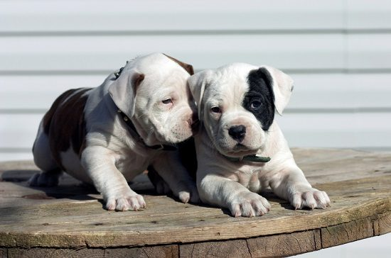 Are Some Dog Breeds Greedier Than Others?