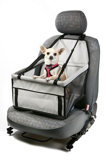 Best Dog Products for Travelling