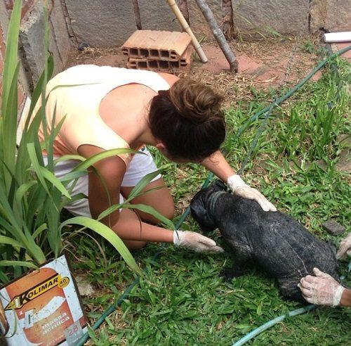 Khaya bathing Luiza who had severe mange