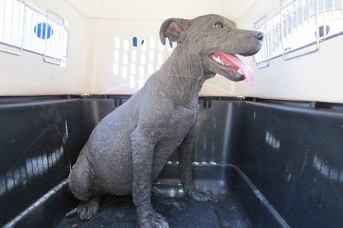 Luiza when rescued 2