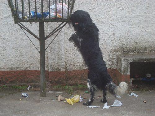Street dogs (2)