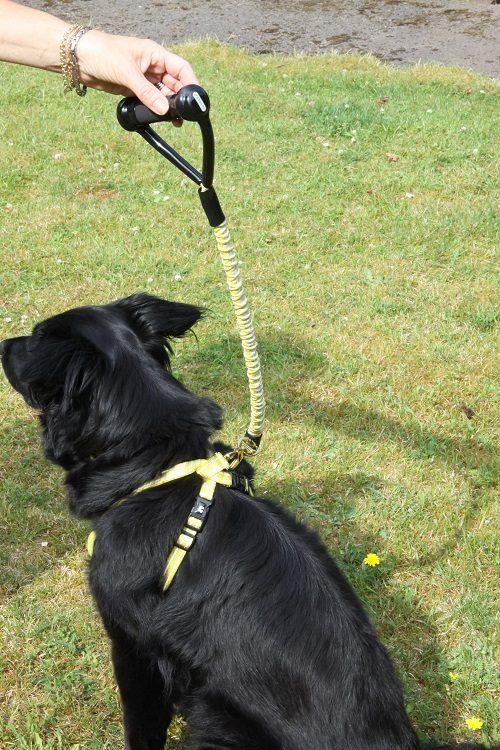 Dogness anti shock dog lead