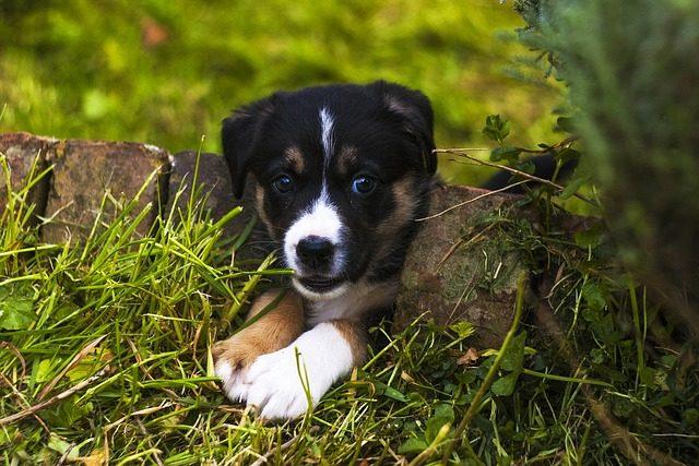 2282b71d026bcf78_640_dog-garden