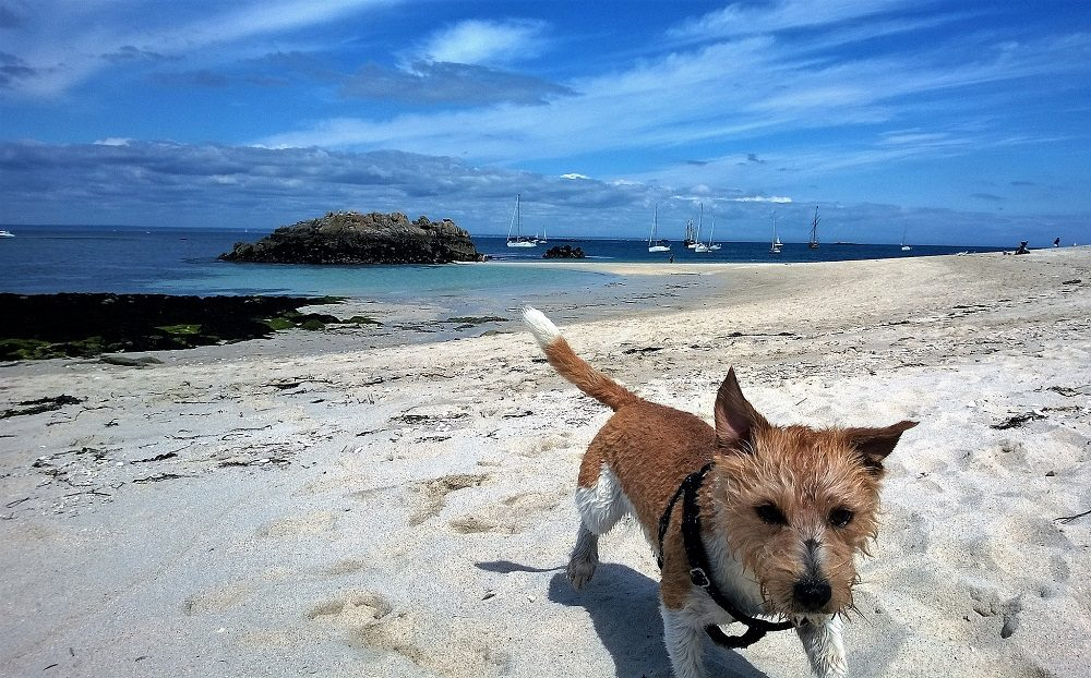 Travelling to France With a Dog? Brittany Needs Your Attention
