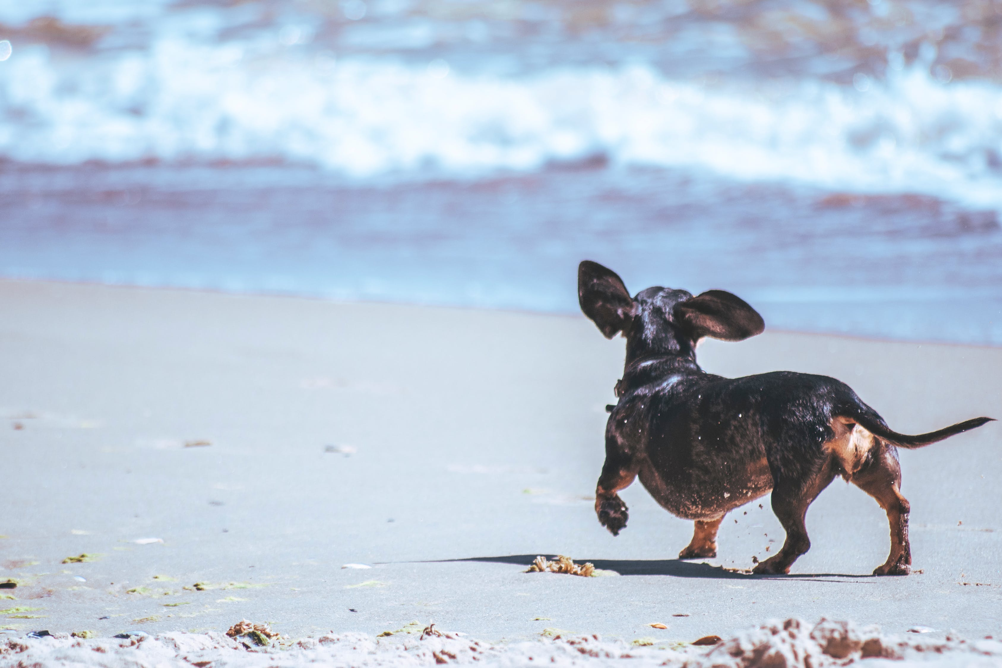 These 5 Pet Brands Should Be on Your Radar
