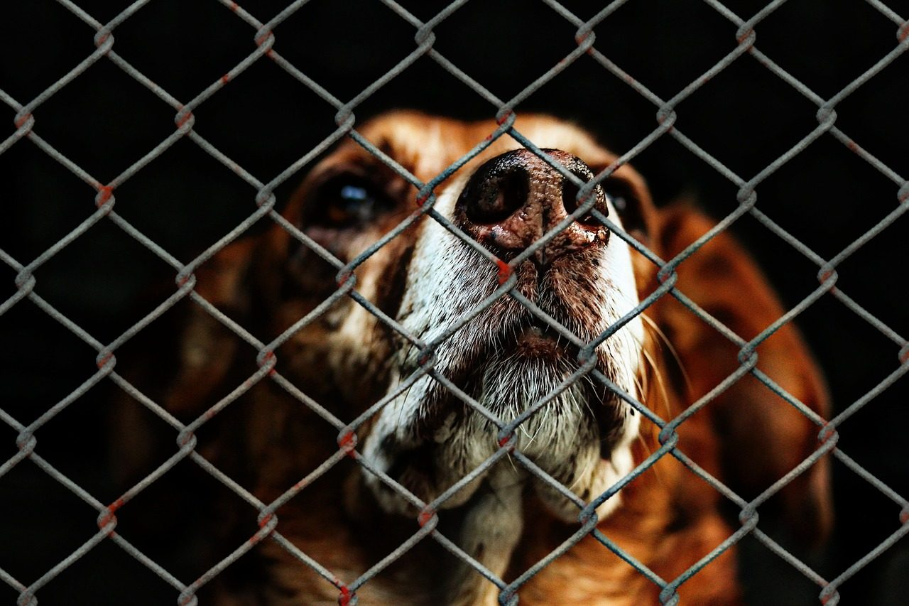 A New Low: MP's Animal Cruelty Bill is Filibustered by Three Conservative MPs