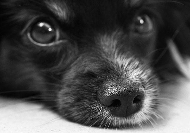 dog face photo