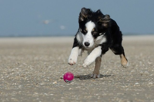 5 Ways to Choose the Best Diet for Your Dog