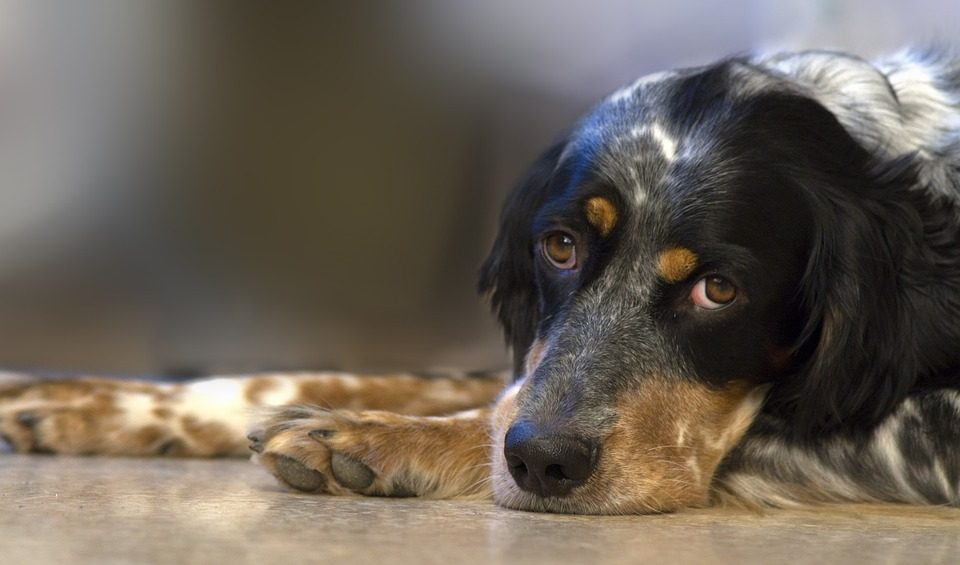 Does Your Dog Secretly Hate it When You Do This?