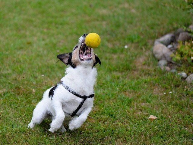 play dog photo