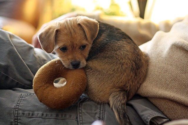 dog toy photo