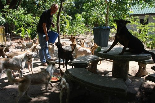 A View from Thailand: What's a Dog's Life Worth?