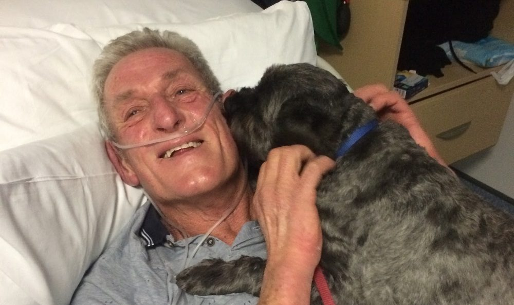 Meet the Dog Who Barked His Owner out of a Coma