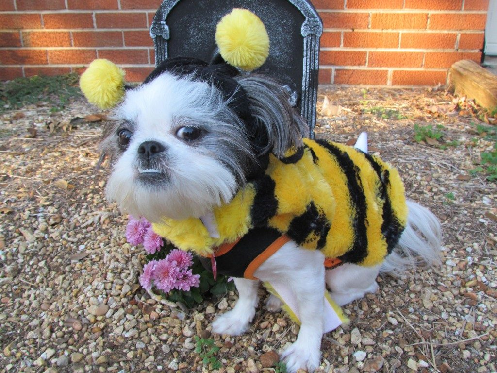 13 Dogs Dressed up for Halloween That Are Guaranteed to Make Your Day
