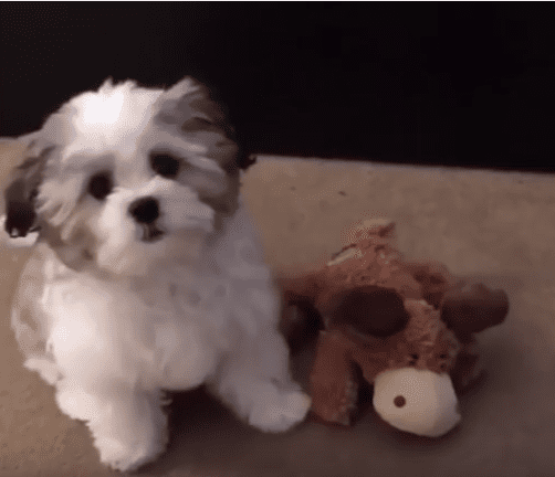 WATCH: Does Your Dog Know Who His Best Friend Is?