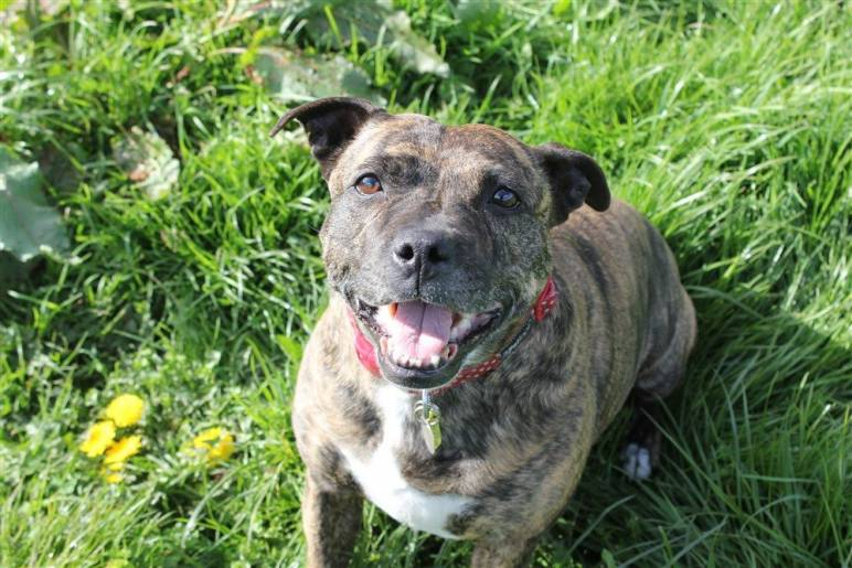 This Dog Has Spent Over 10 Years in Rescue, Can You Help Her Find a Home?