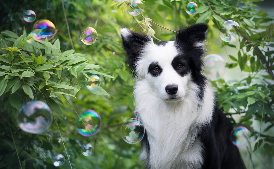 Can Dogs Have Tourette's Syndrome?