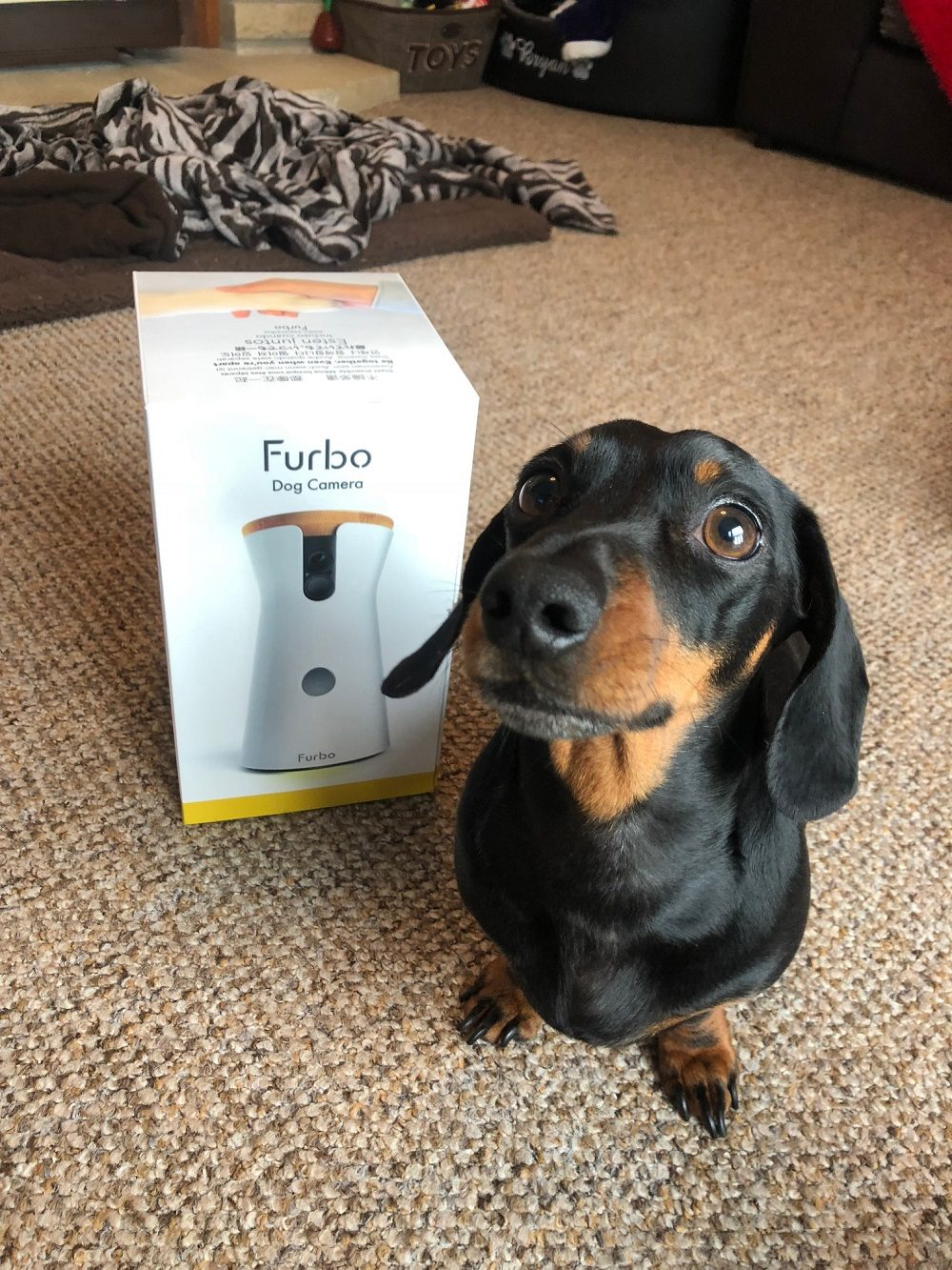 Furbo Dog Camera Review: A Good Way to Keep an Eye on Your Pets?