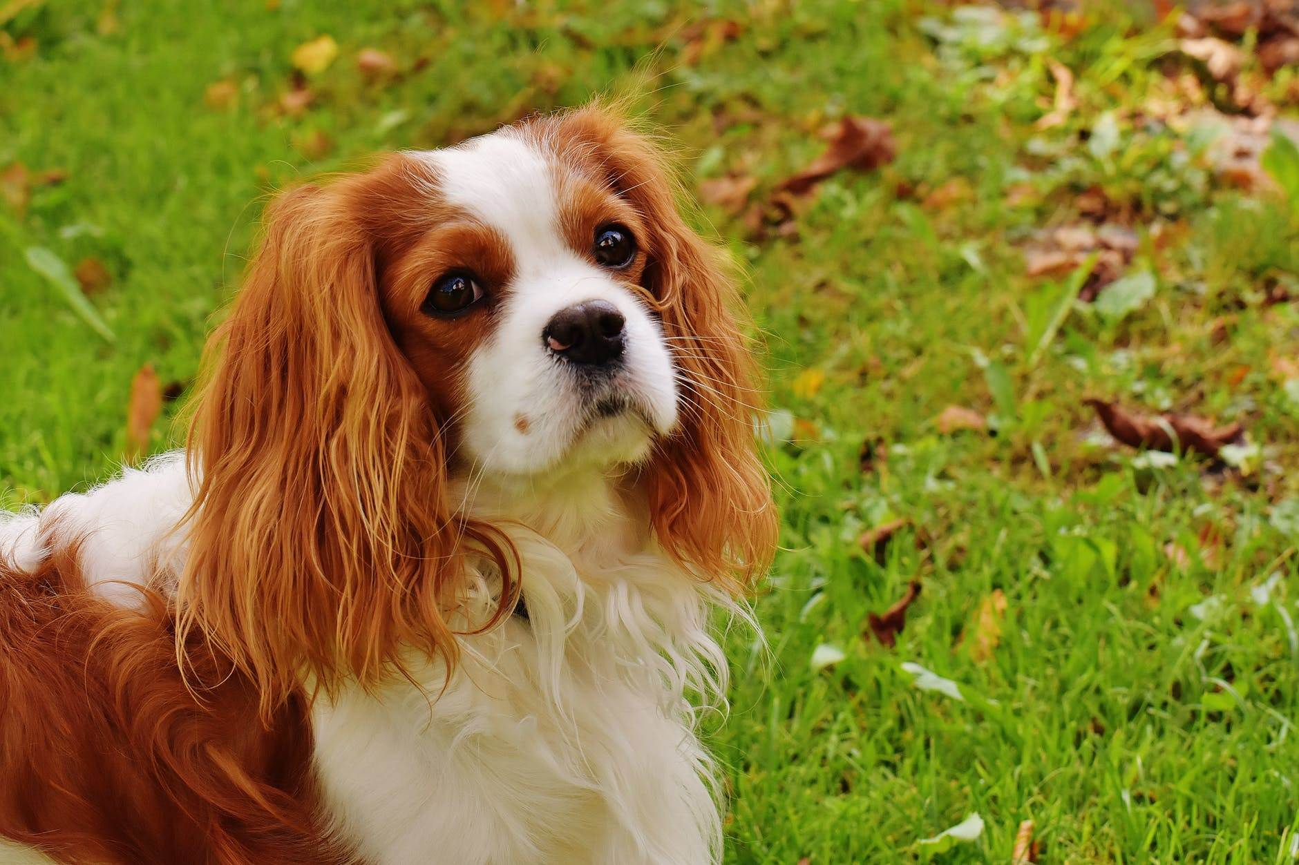 Making Money From Dog Cruelty - This Must End