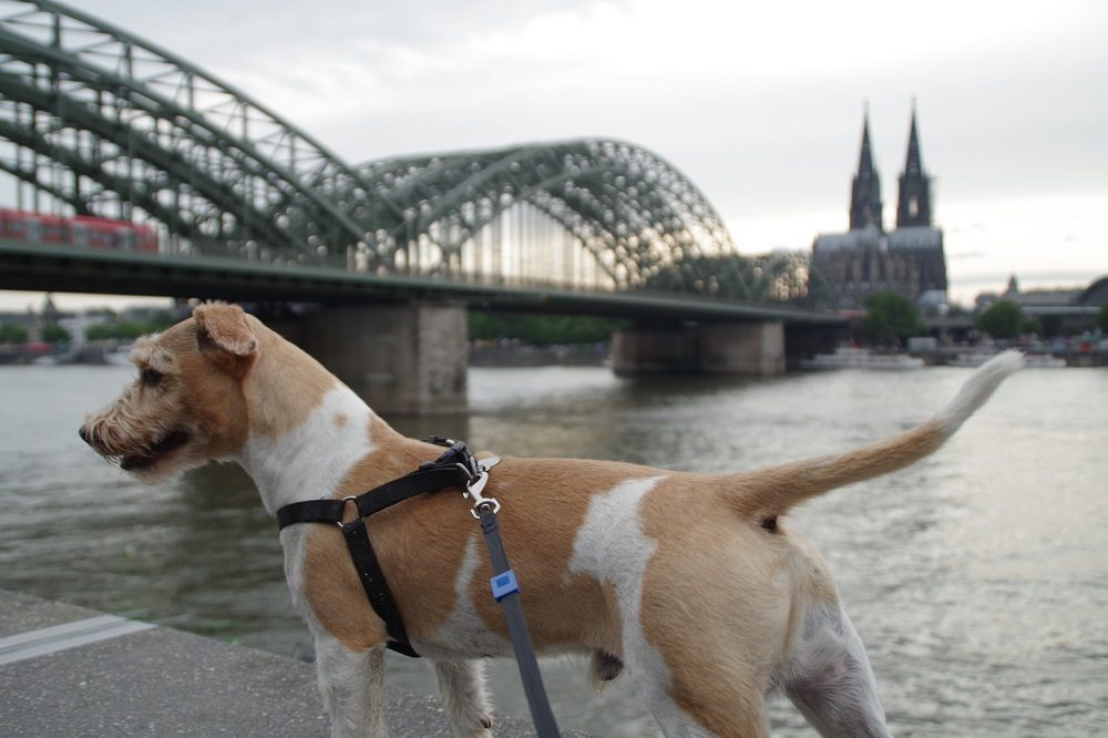 What You Need to Know About DFDS Pet Friendly Cabins: A Dog Owner's Review