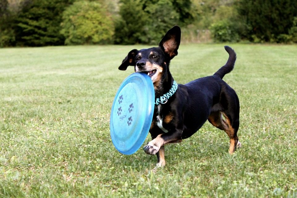5 Games Your Dogs Will Love, And Why!
