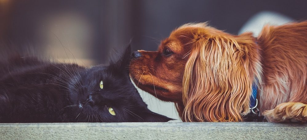 Are Cat and Dog Fleas the Same and What Do They Look Like?