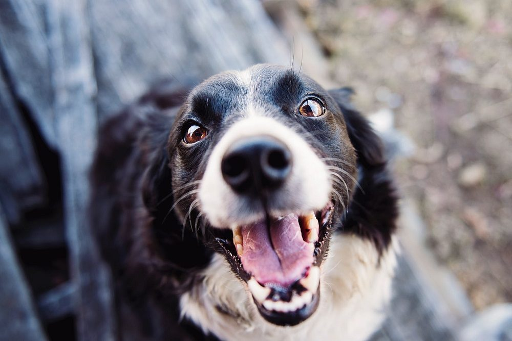 Dog Dental Care: How to Look After Your Dog's Teeth