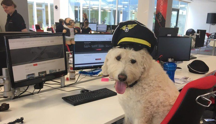 Bring Your Dog to Work Day - When Is It? What Is It? Oh, Look At This!