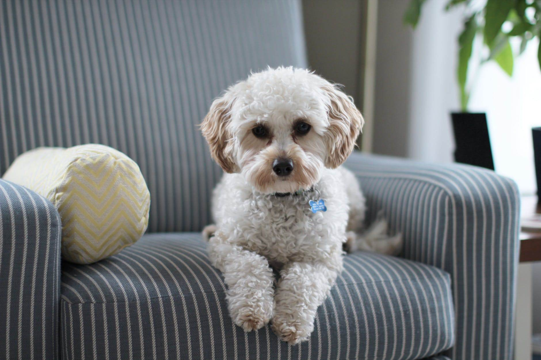 Dog Proofing Your Home: 7 Best Ways to Keep Your Dog Safe
