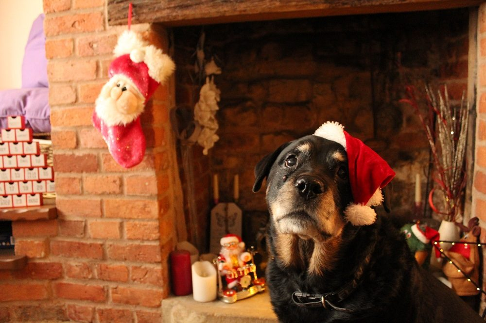 Christmas Dog Treats You Can Make at Home