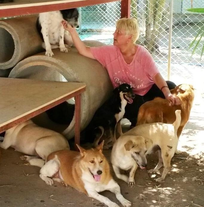 SOI Dog Foundation Changed My Life - An Inspirational Story
